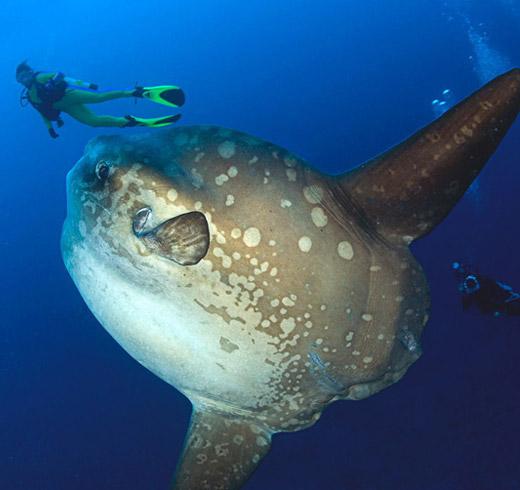 Diving di Nusa Penida