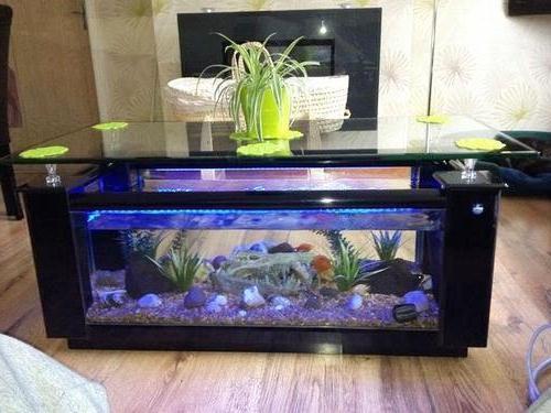 Dekorasi Aquarium atau Tanaman Hias