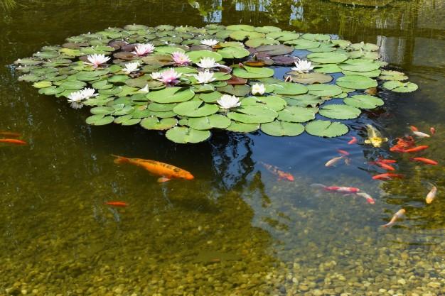 Tak Perlu Bingung, 5 Inspirasi Kolam Ikan Belakang Rumah Ini Bisa Kalian Coba