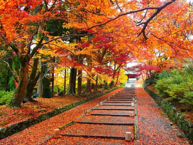 Nikmati Musim Gugur Terindah di Dunia dengan Mengunjungi Tempat Ini